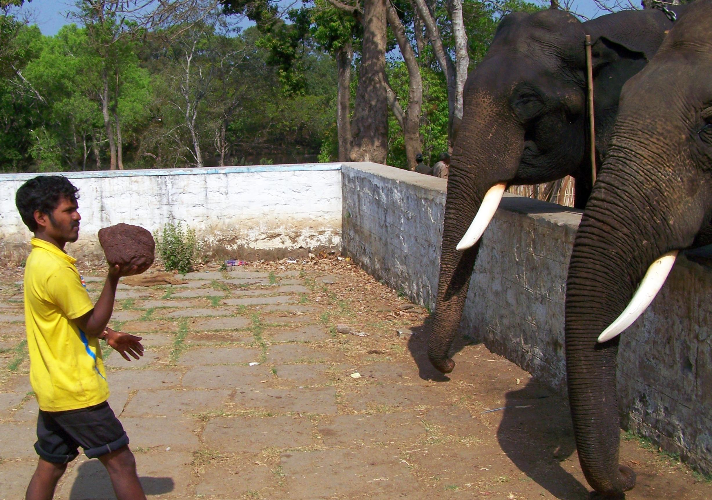 Elefanter matas med Mudde FOTO ZAC OYEAH
