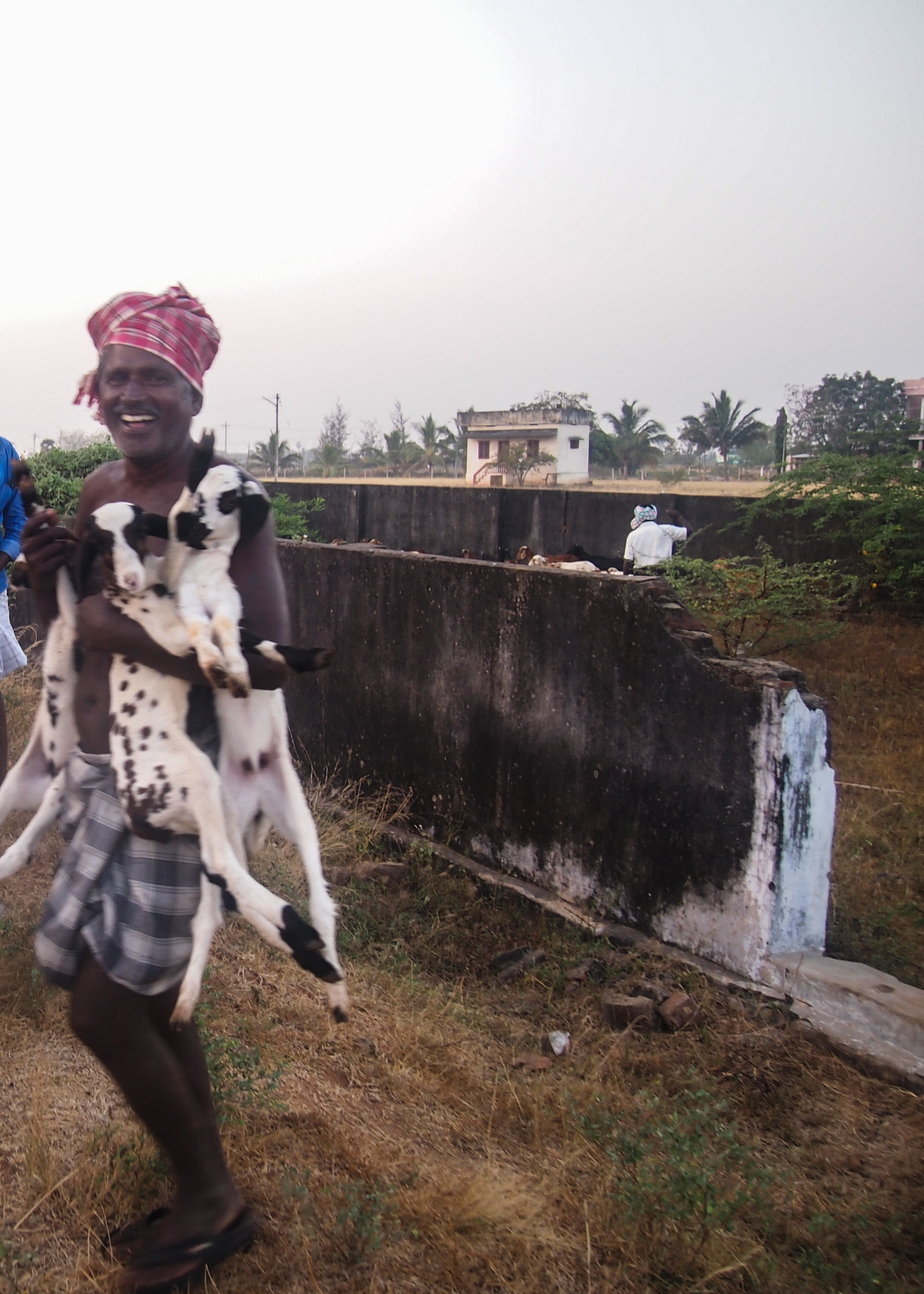 Herden Perumal med tre av sina lamm. Foto Patrick Wennström.