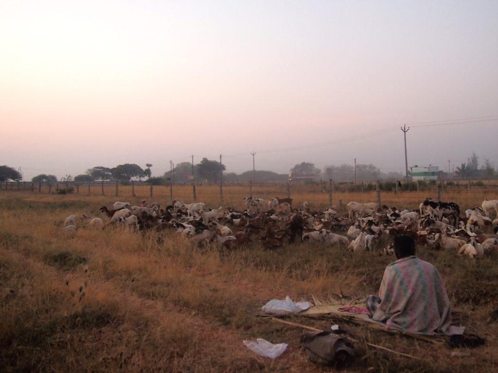 Te i gryningen vid övernattningsplatsen där jag mötte upp herdarna före vandringen. Foto: Patrick Wennström