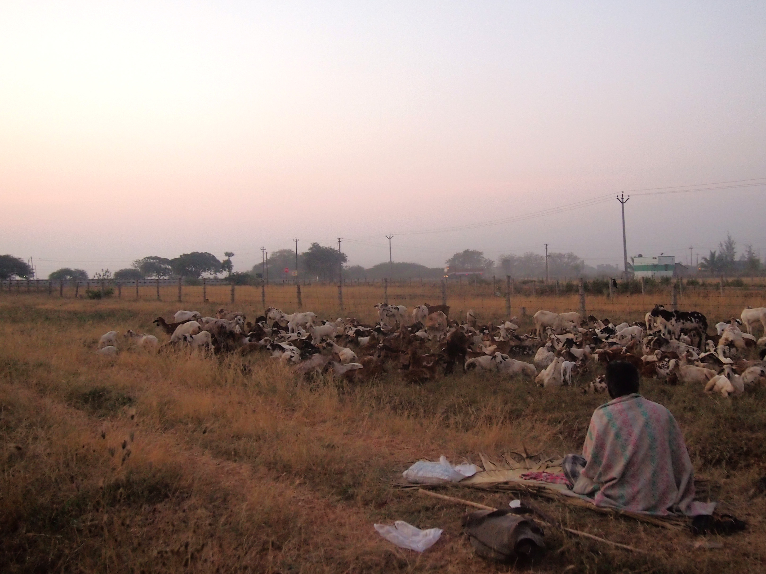 Te i gryningen vid övernattningsplatsen där jag mötte upp herdarna före vandringen.Foto; Patrick Wennström