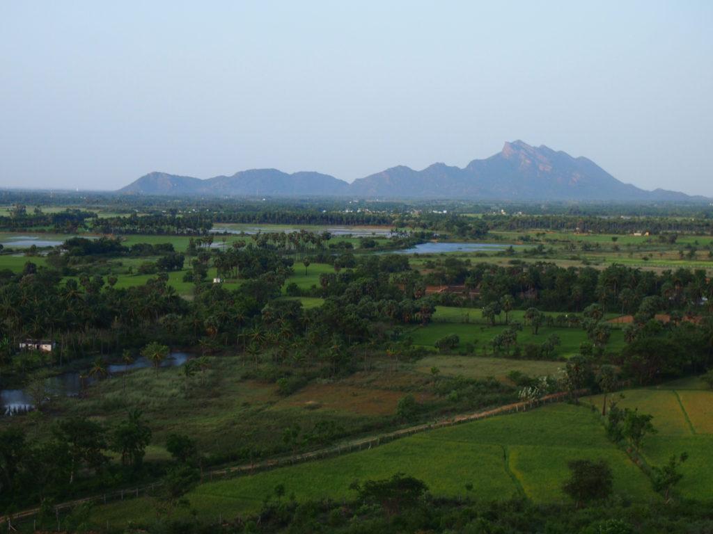 Landskapet domineras av jordbruk. Herdarna från Peikulam kommer till detta område för sommarbete i utbyte av en liten summa pengar från bönder för att gödsla deras åkrar. Foto; Patrick Wennström