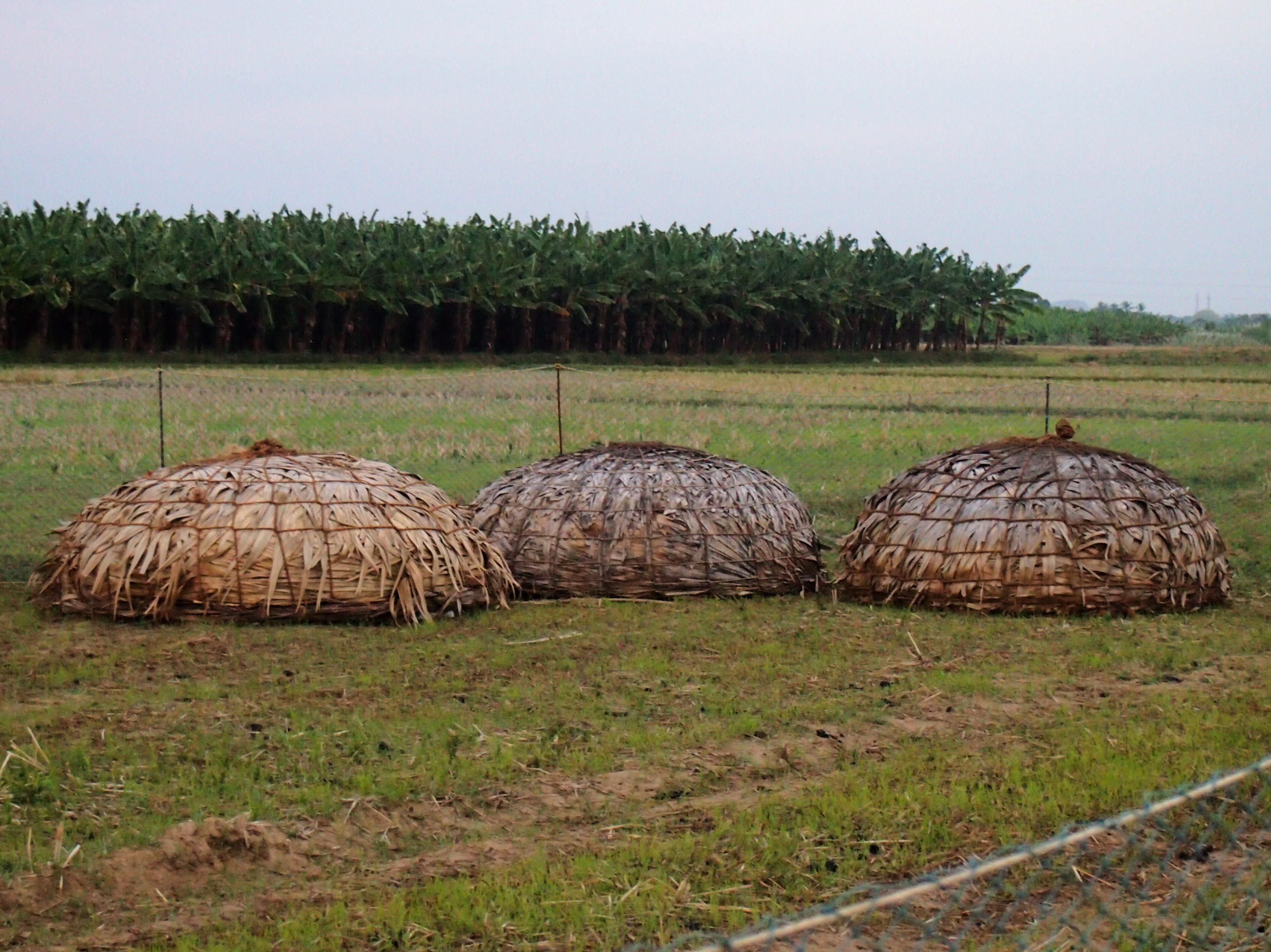 Upp- och nervända korgar gjorda av palmblad användes förr för att bära lamm i under vandringarna. Idag fraktas de med bil tillsammans med lammen och används endast som nattinhägnad åt nyfödda lamm.Foto; Patrick Wennström