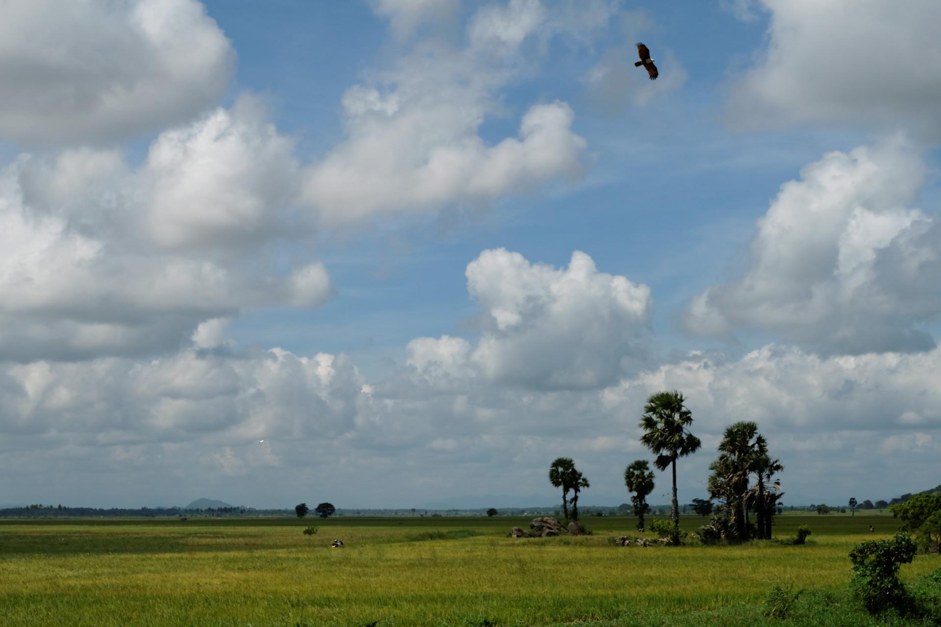 Längs vägen ges en del naturupplevelser, som när den här rovfågeln breder ut sina vingar. Foto: Johan Mikaelsson