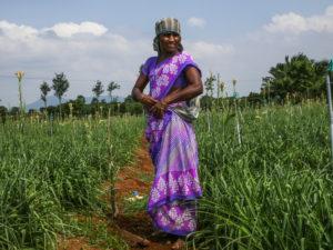 Pandeeswari gör sig redo för en arbetsdag på blomfältet. Foto: Rebecka Strand.