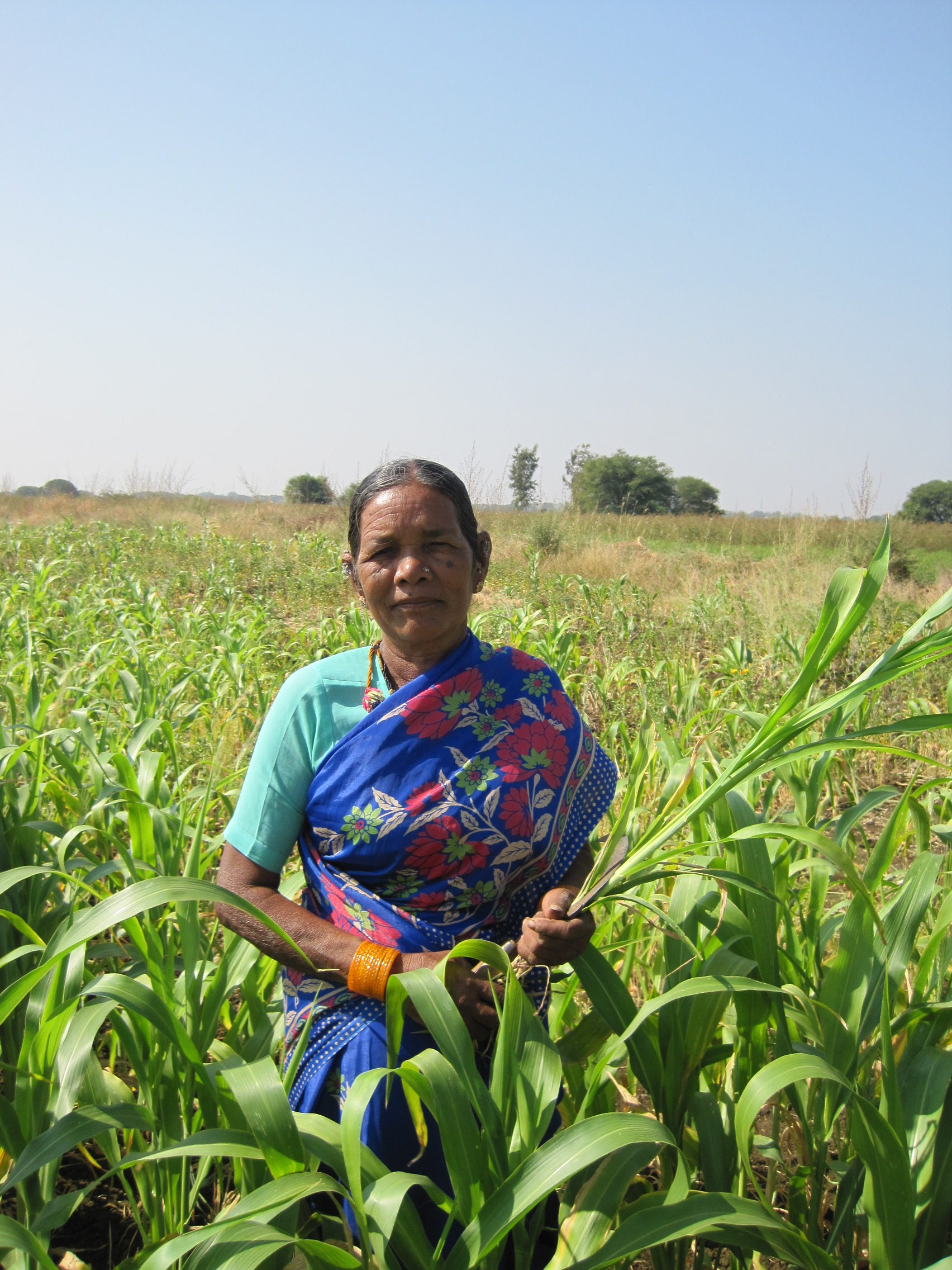 Kamlamma är en av milletsbönderna som arbetar med organisationen DDS. Här ses hon på Chandrammas milletsfält. Foto: Kristina Johansson