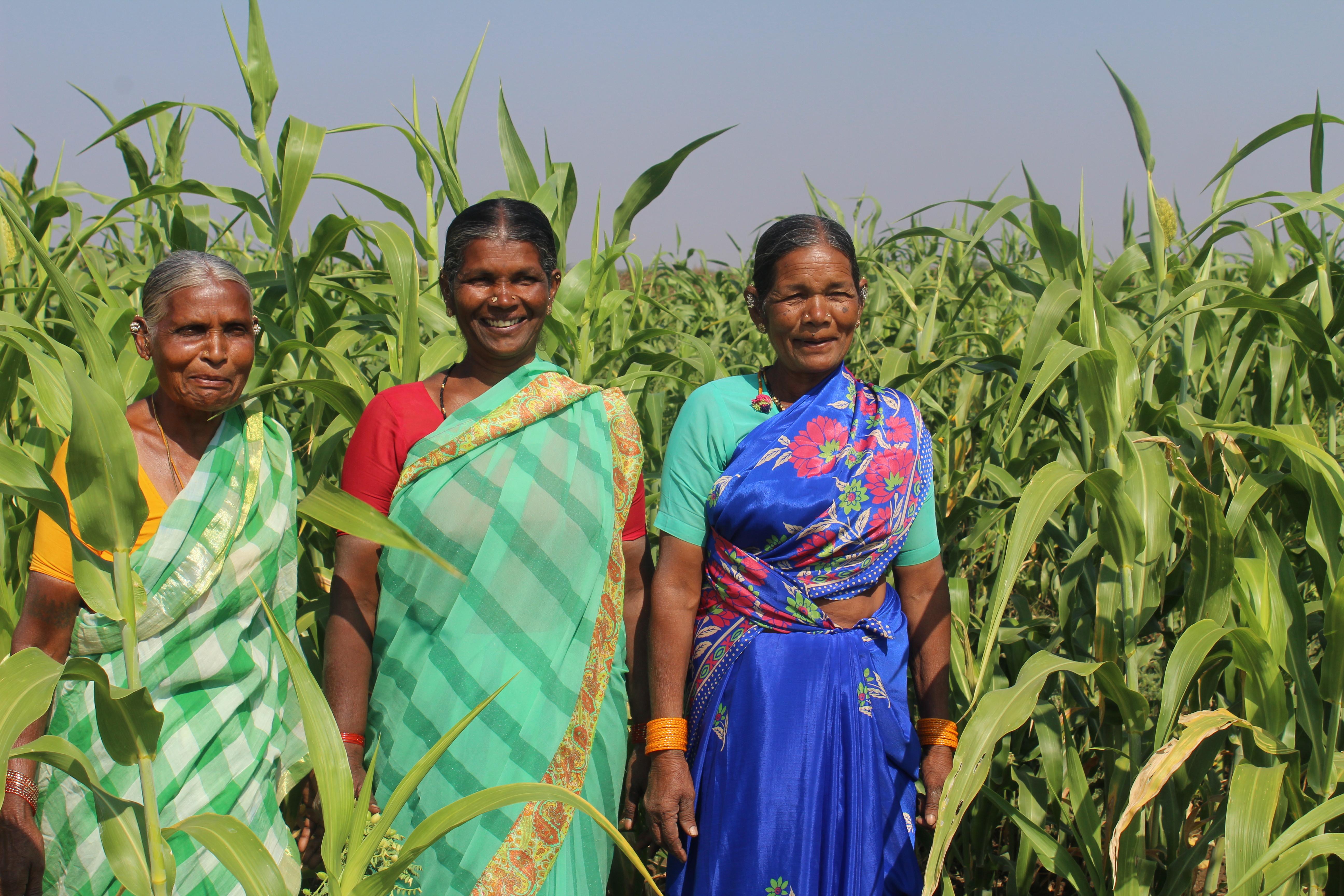 Chandramma, Sammamma och Kamlamma är med i det nystartade nätverket för kvinnliga milletsbönder. Foto Elin Gidlöf.