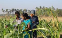 Tre indiska bönder under en kurs i ekologiskt jordbruk anordnad av Kudumbam. Fotograf: Saralinn Wallin & Lovisa Åstrand