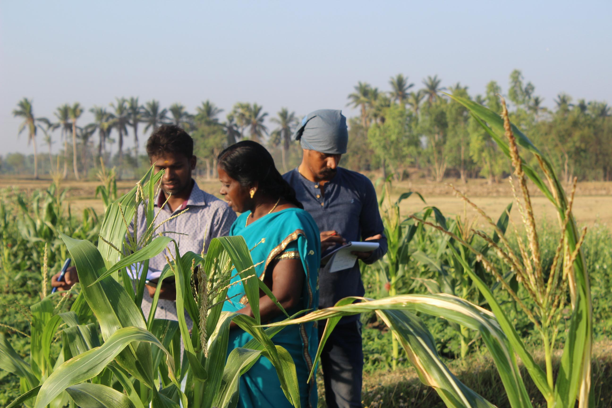 Tre indiska bönder under en kurs i ekologiskt jordbruk anordnad av Kudumbam. Fotograf: Saralinn Wallin & Lovisa Åstrand.
