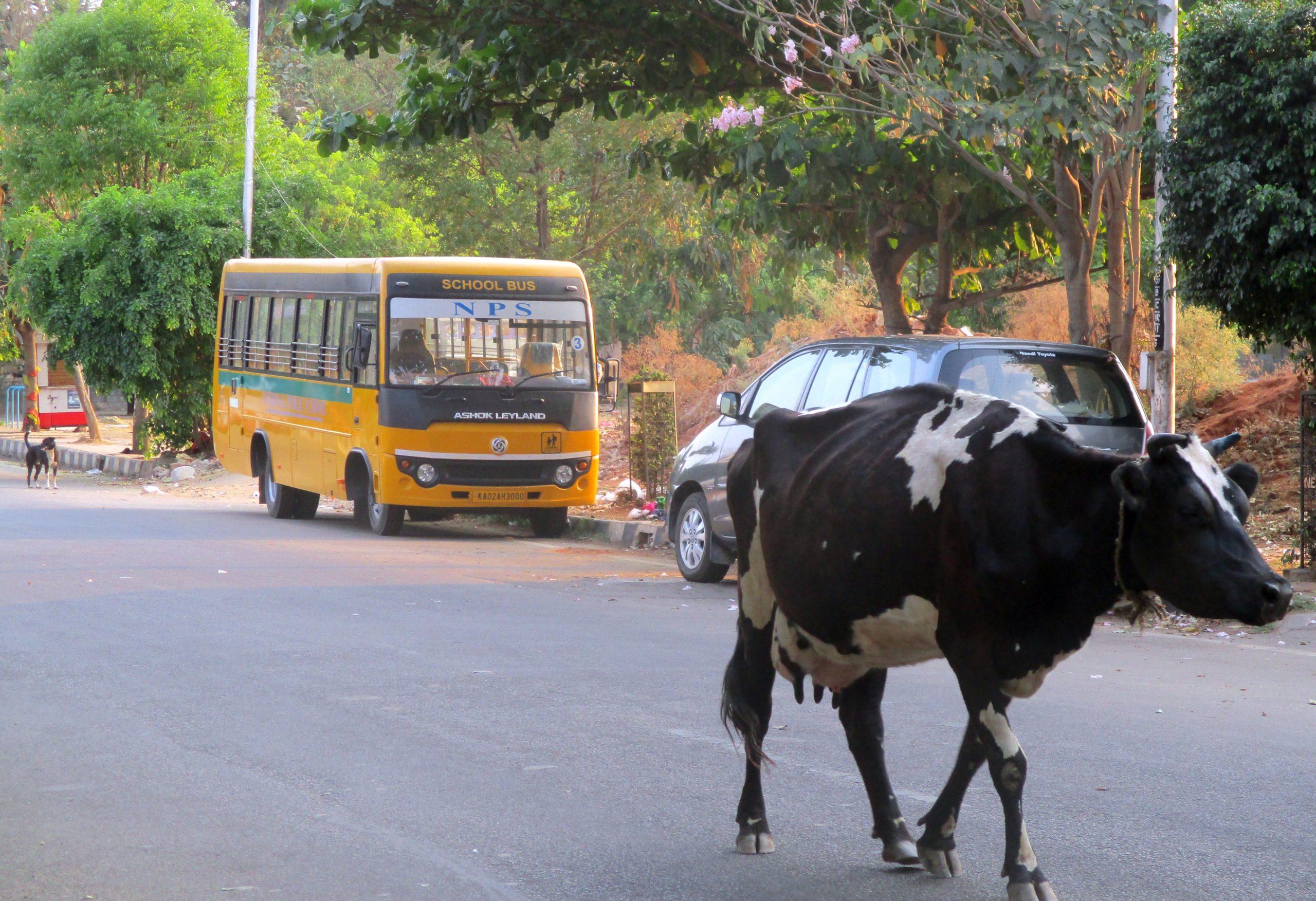 Ko går fri